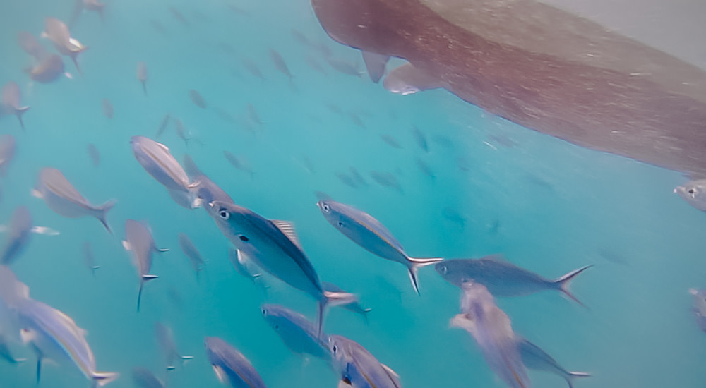 Bina_Terre_Fiji_Travel_Photographer_38