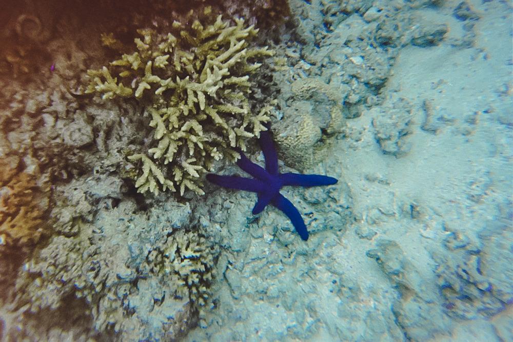 Bina_Terre_Fiji_Travel_Photographer_40
