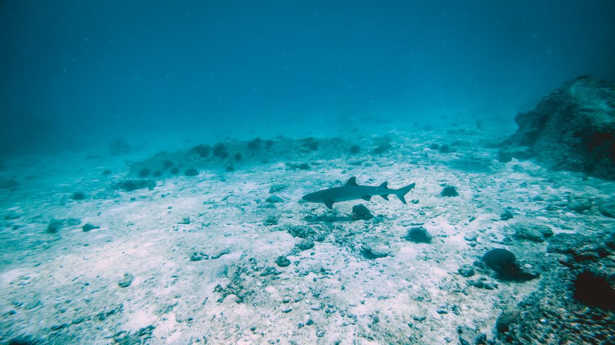 Seychellen_29