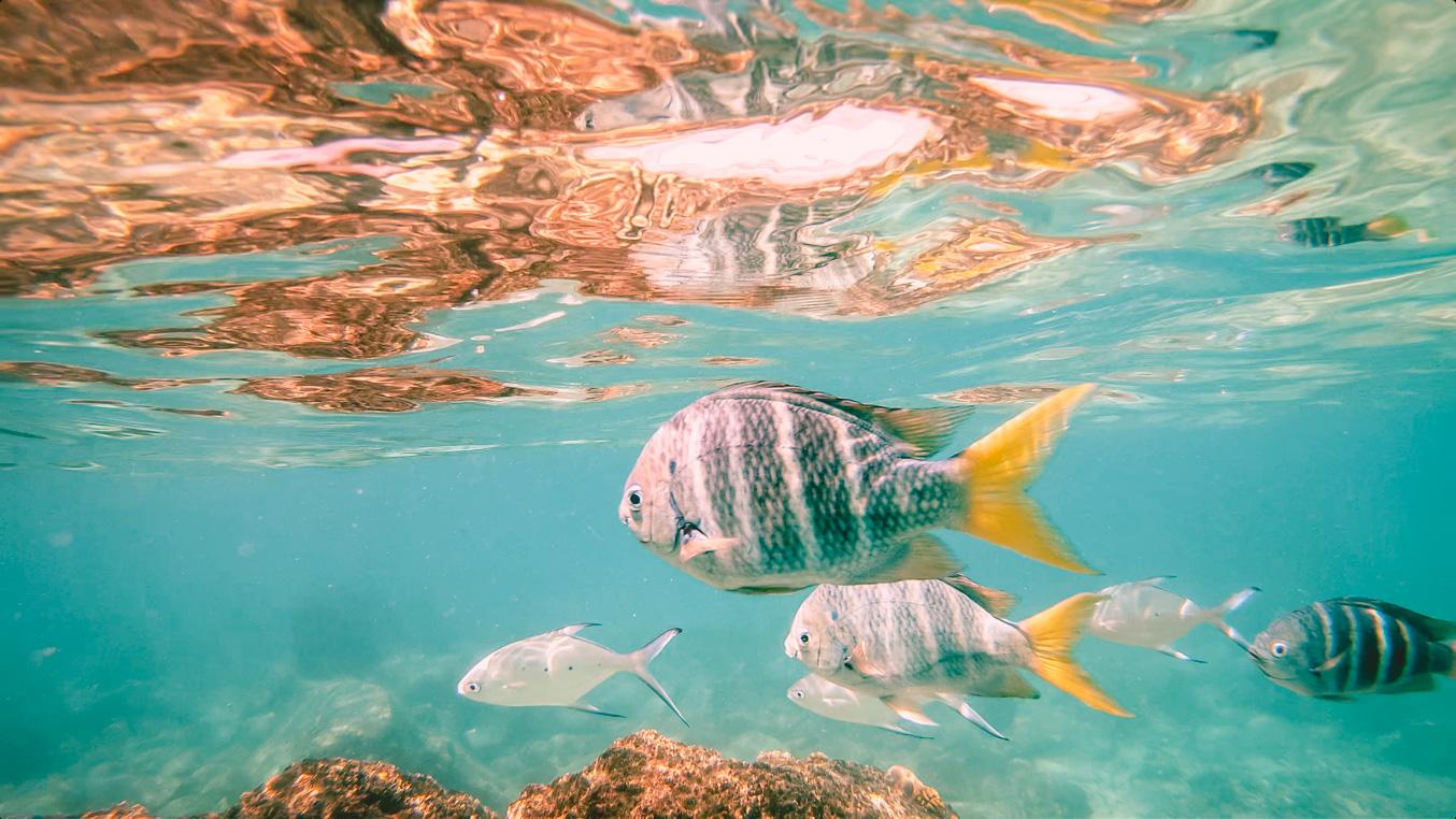 Seychellen_37