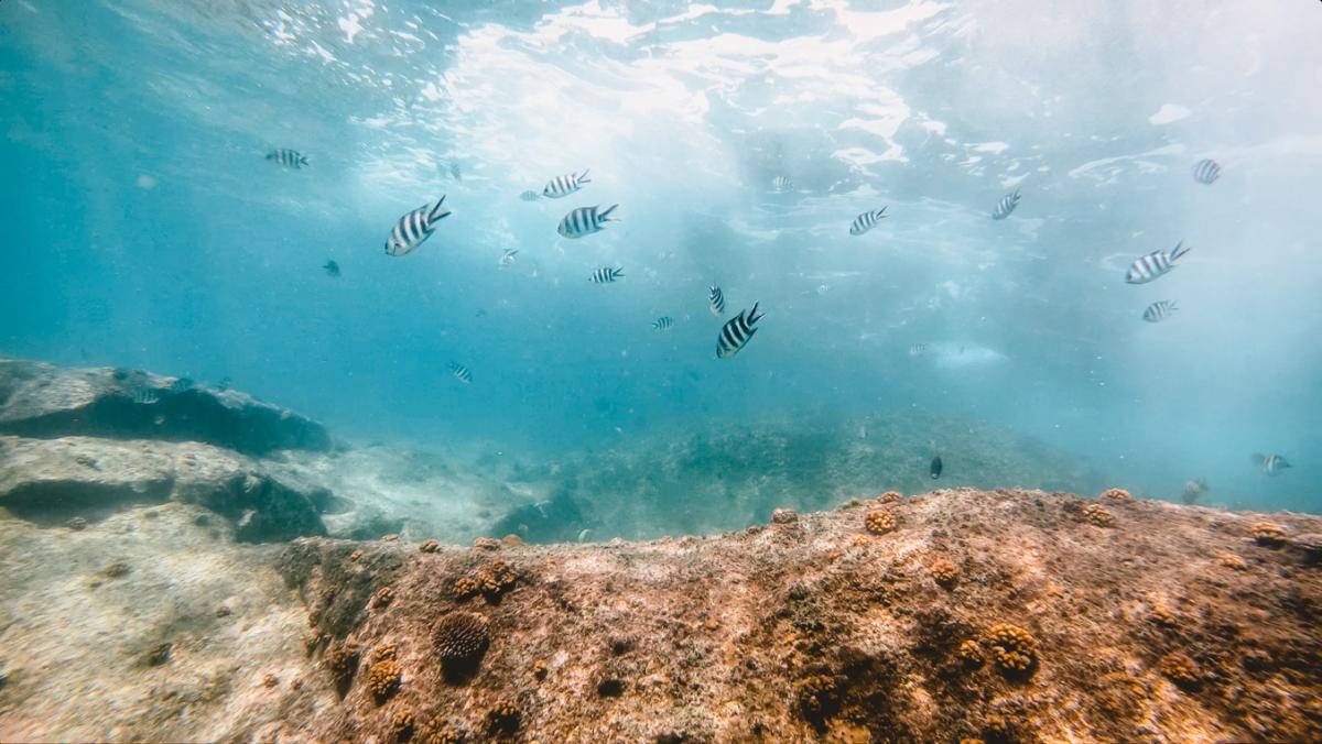 Seychellen_41